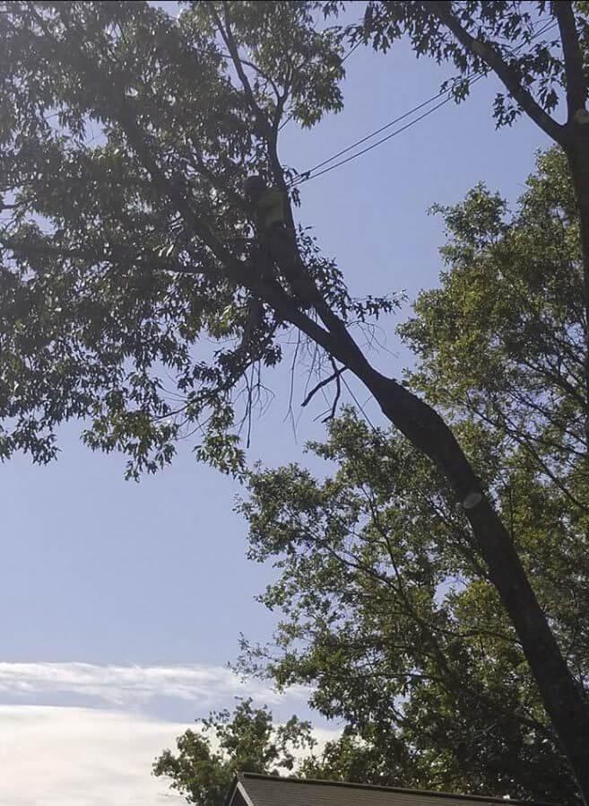 Tall_tree_work_2